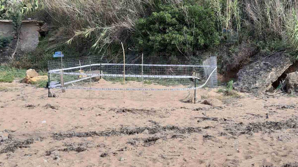 Nuovo nido di tartaruga marina a Trappeto (Pa)